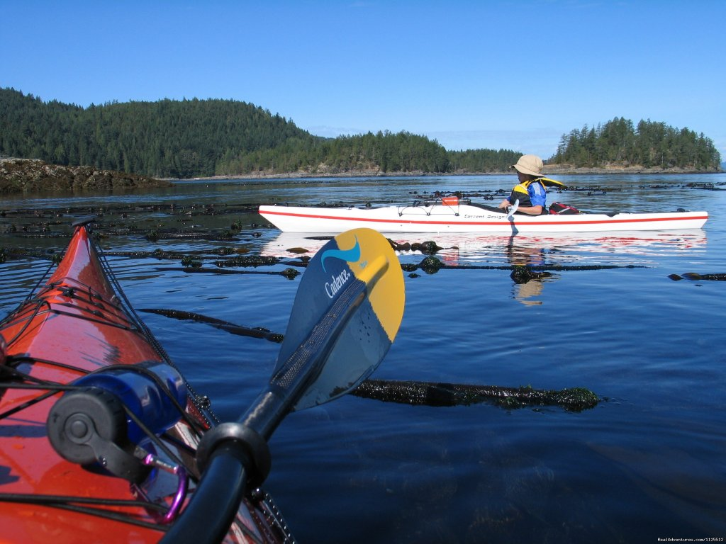 Kids Kayaking into Desolation | Image #22/25 | Sea Kayak Tours Desolation Sound, British Columbia