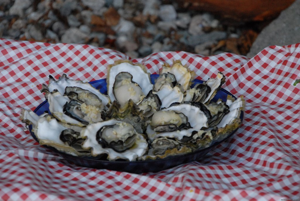 Oysters on the half-shell | Image #16/25 | Sea Kayak Tours Desolation Sound, British Columbia