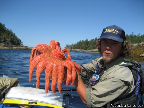 Guide with Giant Sunflower Star - Sea Kayak Tours Desolation Sound, British Columbia