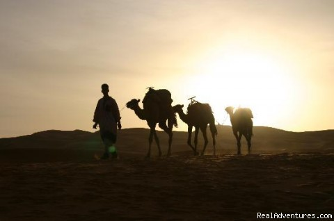 Ksar Bicha -hotel  In Merzouga: Hotel  Bivouac And Camel Ride