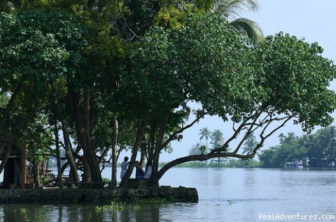 Rich backwater areas in Kumarakom (#4 of 4) - Houseboat Cruise in Kerala Backwaters
