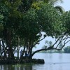 Rich backwater areas in Kumarakom