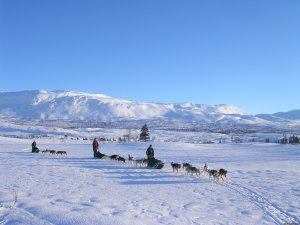 Dogsledding in remote nationalpark Steinkjer, Norway Dog Sledding