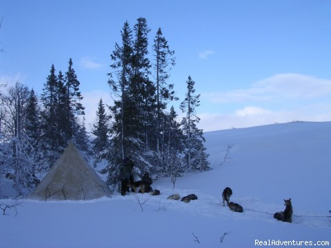 Mountain camp (#3 of 9) - Dogsledding in remote nationalpark