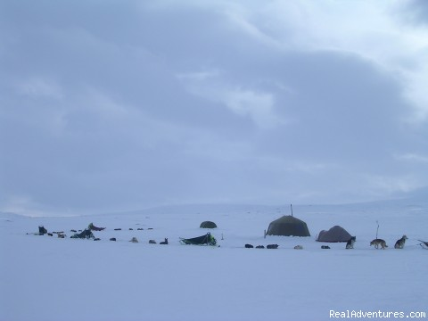 Fishingcamp - Dogsledding in remote nationalpark