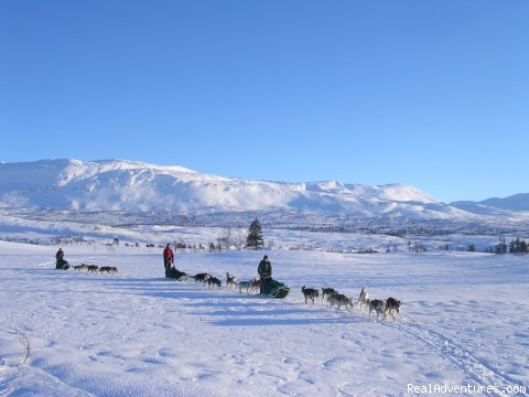 On the road (#1 of 9) - Dogsledding in remote nationalpark