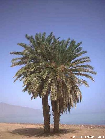 Palm Tree view from our beach - Dahab and Sinai - The Natural Escape