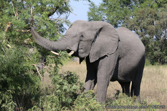 South African Wildlife - The Best of South Africa & Victoria Falls