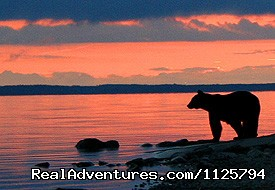 Black Bear - Alaska Adventure Tours