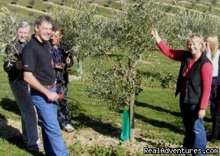 The magic of Olive oil - Creative Tourism