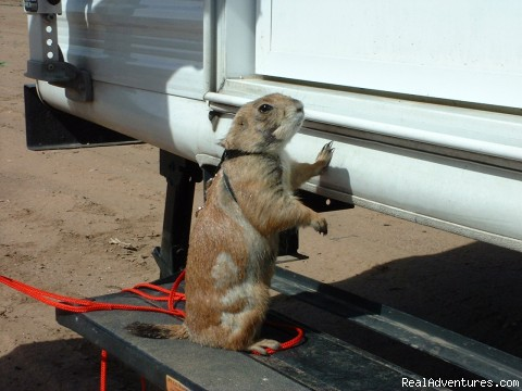 Pet Friendly all kinds - Wild West Getaways At Rusty's RV Ranch