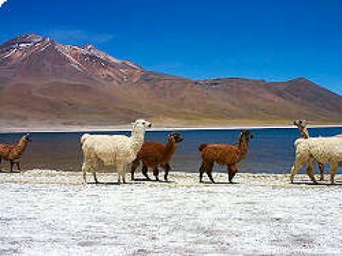ATACAMA DESERT (#4 of 4) - Patagonian-desert-island In Chile