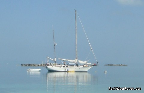 - Caribbean Sailing Charter
