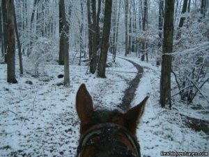 Scenic Guided Trail Rides Through The Pocono Woods Horseback Riding White Haven, Pennsylvania