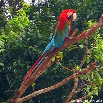 Birdwatching tours in Guyana Coastal Plain, Guyana Birdwatching