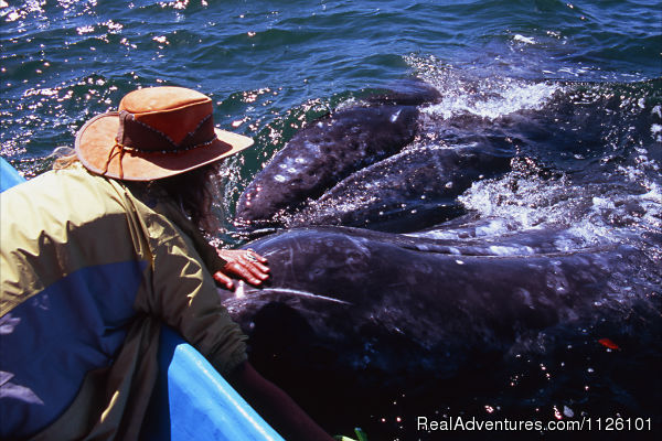 Meet friendly gray whales and see huge blue whales