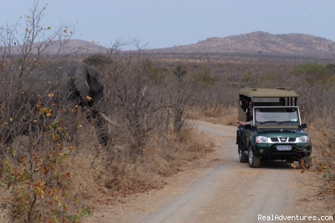 South African wildlife safaris: Game Viewing near an elephant