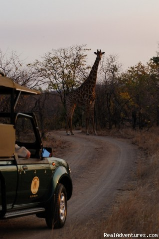 Open safari vehicle - South African wildlife safaris