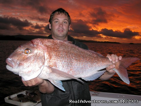 Snapper - Sportsfishing Charter Boat New Zealand