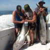 More Yellowfin Tunas