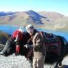 Meet the Yaks in Tibet!