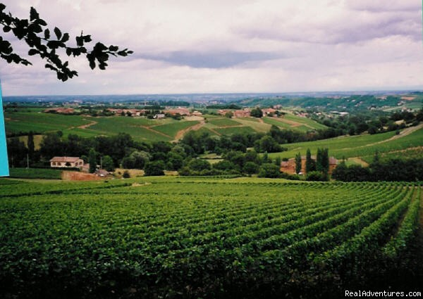 Beaujolais, in the French wine country