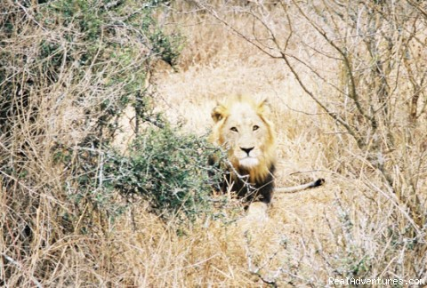 On Safari in South Africa - Cruise Planners - Cruises, Tours, Deals & More!
