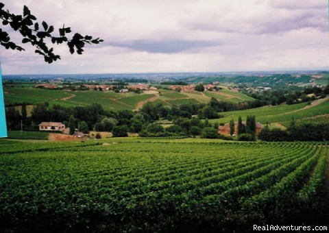 Beaujolais, in the French wine country - Cruise Planners - Cruises, Tours, Deals & More!