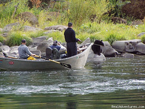Bears on the Rogue - Oregon and Idaho River Rafting - ECHO River Trips