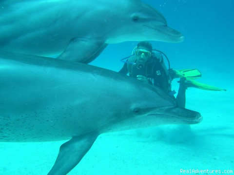 Even dolphins like to dive with us! Join - Red Sea diving-safaris - Yalla Dive