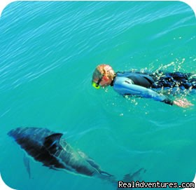 Dolphin Swimming - Romantic getaways at  Austin Heights Scenic B&B