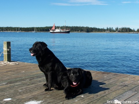 Our ship's dogs! - Eco Sailing Expeditions