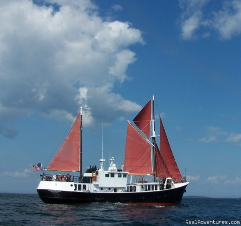 Wanderbird under Sail! - Eco Sailing Expeditions