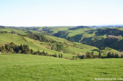 The farm near Kamahi Cottage - Romantic NZ country cottage: 5-Star B&B  Waitomo