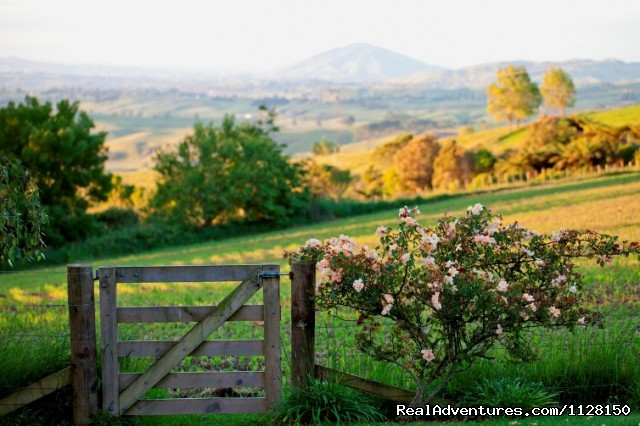 Golden evening views from Kamahi Cottage - Romantic NZ country cottage: 5-Star B&B  Waitomo