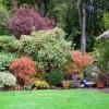 The garden in autumn at Kamahi