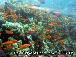 Anthias of Aqaba - Create your own private tailor-made tour of Jordan