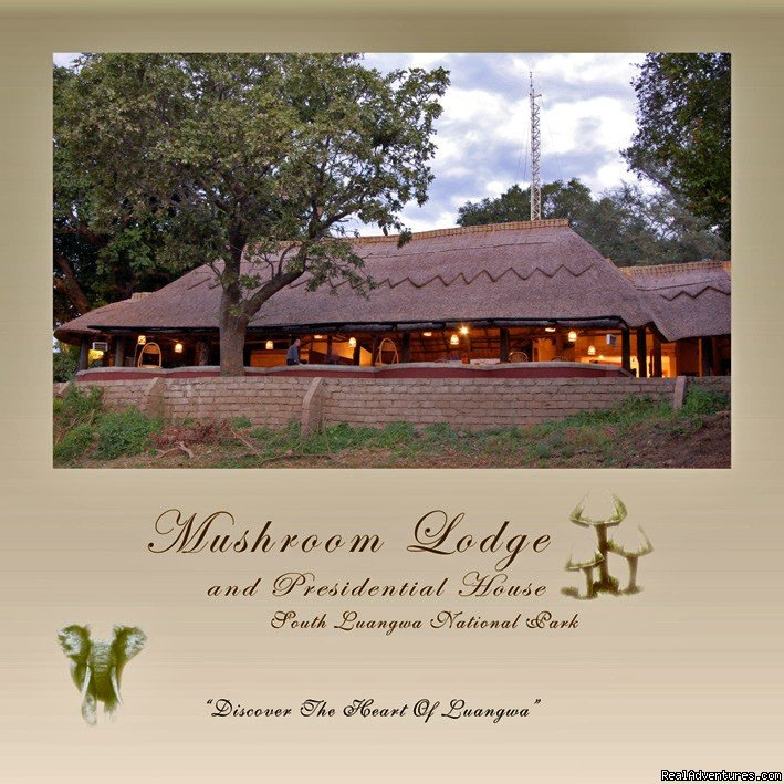 Mushroom Lodge is situated in the banks of the Mfuwe Lagoon in the heart of South Luangwa National Park. This new lodge offers luxury comfortable modern accommodation in twelve secluded chalets overlooking the lagoon.