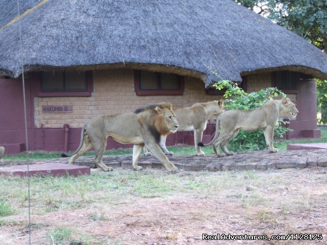Front of one of the chalets - Lions came to visit - Ultimate Safari experience at Mushroom Lodge