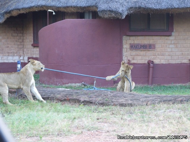 Chalets - Ultimate Safari experience at Mushroom Lodge