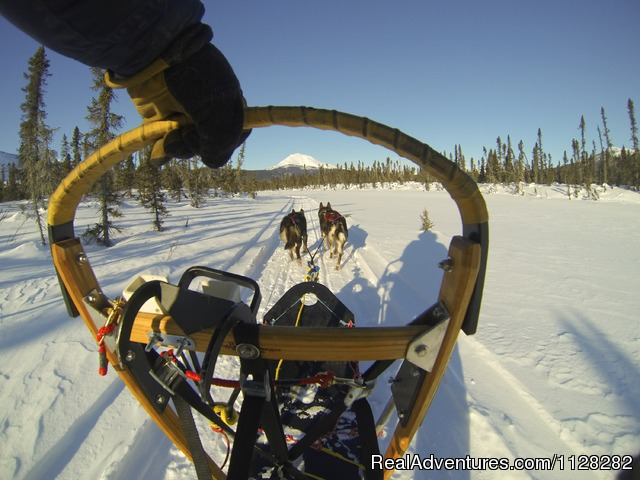 Run your own team - Alaska Brooks Range Dog Sledding Tours