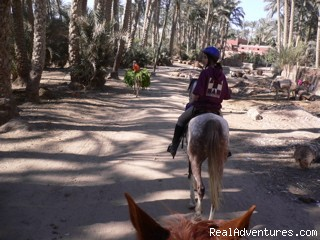 Visit Villages In The Palm Groves - Explore Egypt on Horseback