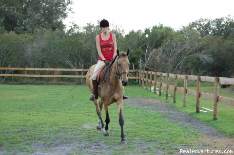 Horse back vacation near Myakka National Park: Horse Back riding vacation for beginners