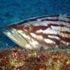 Malta, Marfa, Scuba diving