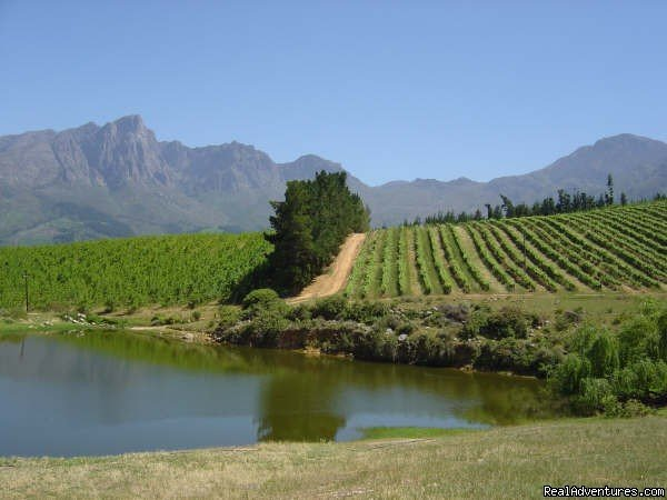 Tulbagh valley | Image #15/16 | Dreamcatcher cottage