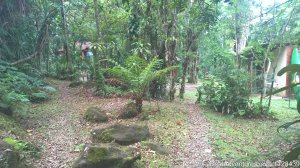 Enjoy life in the Atlantic Rain Forest Morretes, Brazil Bed & Breakfasts