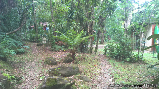 Enjoy life in the Atlantic Rain Forest: Our Cabins