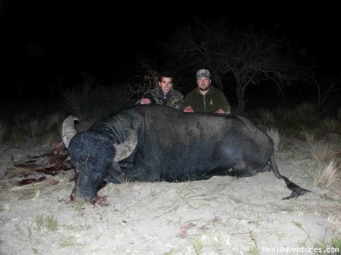 Water Buffalo - Argentina Hunts