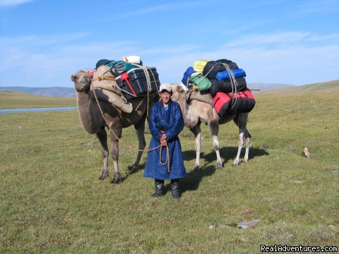 Camels carry luggage and equipment - Hiking and Trekking Holiday Vacations in Mongolia