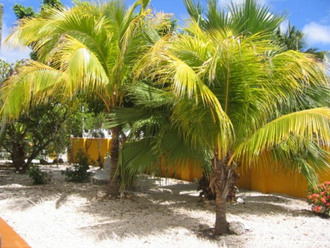Garden (#4 of 6) - Sunny Bonaire vacation rentals